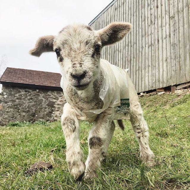 Farm Life Spring 2019 - Press Mains Farm Cottages